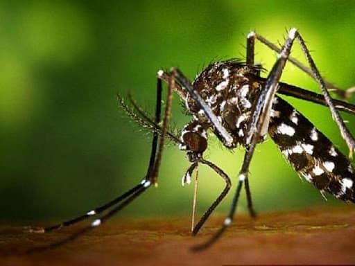 repelente-de-mosquitos