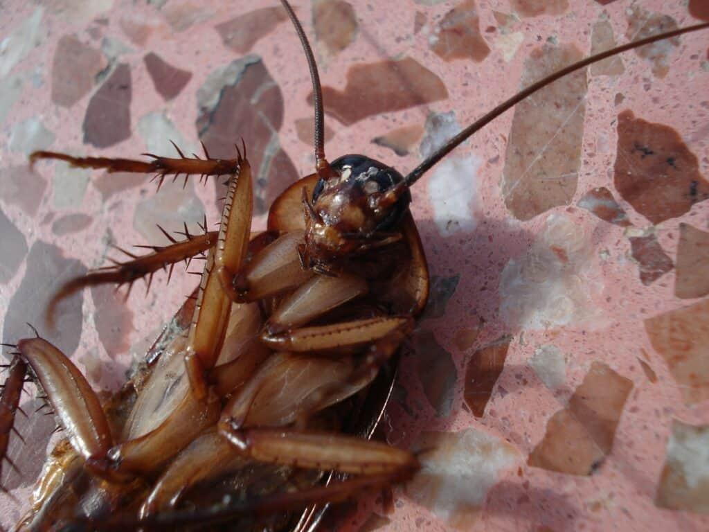 repelente de cucarachas